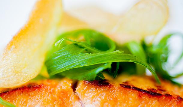 Close up of Salmon and garnish