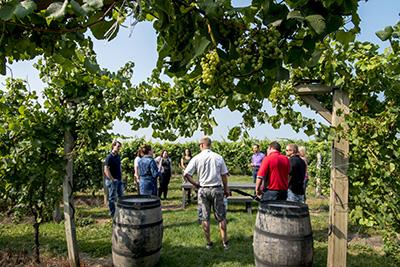 Team Building group in the vineyard