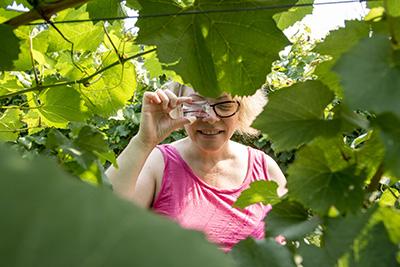 Team Building Fun in the vineyard