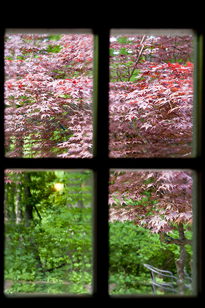 Beautiful fall colors can be seen through a window